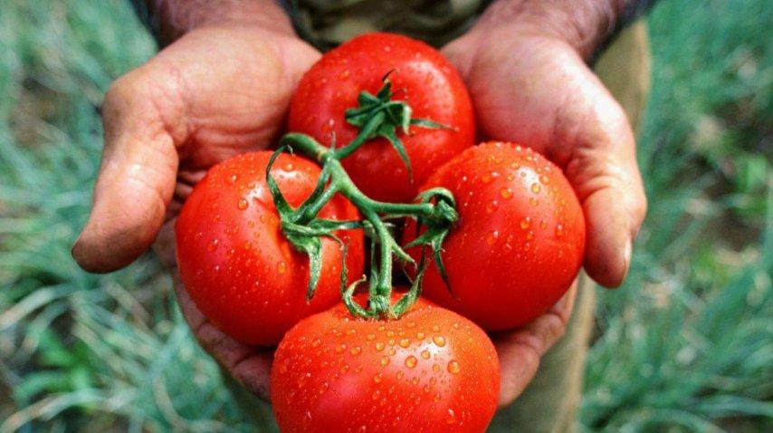 El tomate en la heladera pierde su sabor