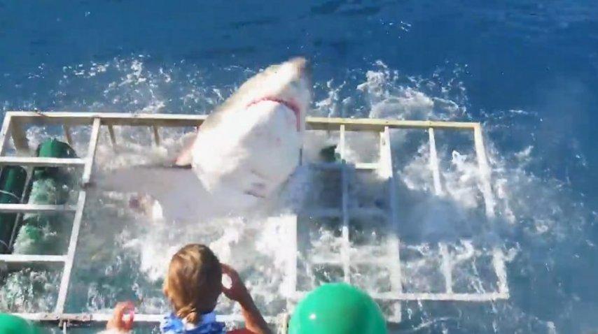 Momento en el que el tiburón asesino rompe la jaula