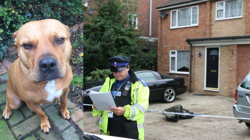 Las autoridades ya eutanasiaron al animal<br>