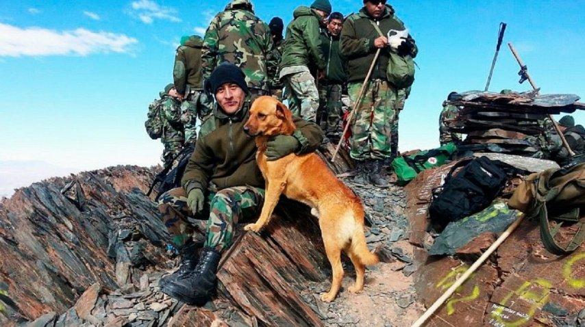 Perro del ejército ascendido a sargento