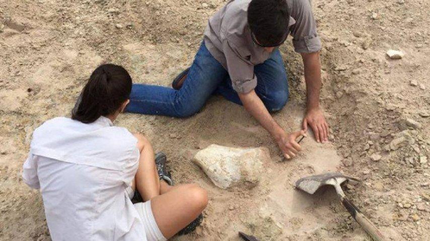 Encontraron restos de un dinosaurio de 15 metros en Neuquén - Crédito:prensa.uncoma.edu.ar