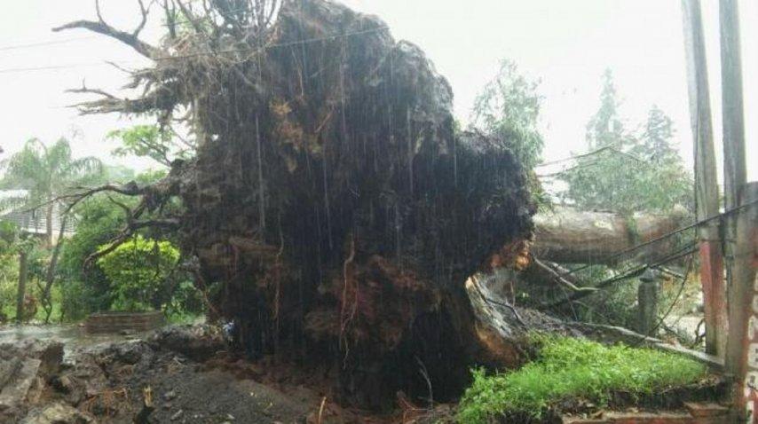 Un árbol gigante cayó sobre una camioneta y mató a un nene - Crédito: La Gaceta de Tucumán