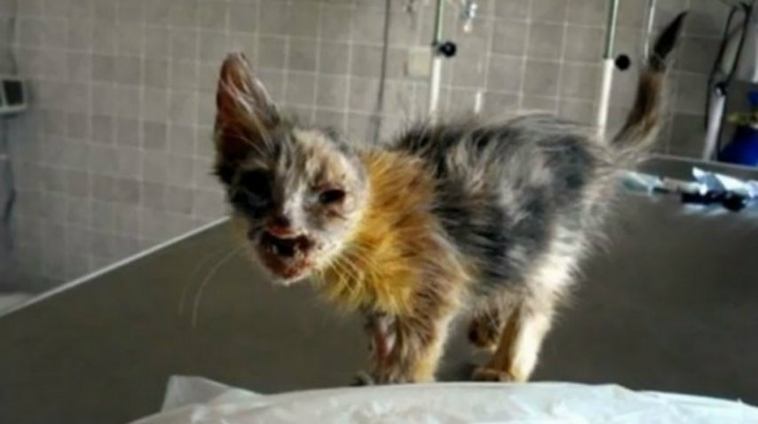 Los veterinarios hicieron todo lo posible por curarla<br>