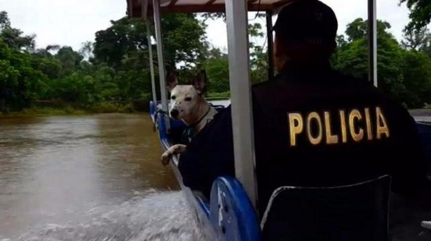 <p>Anciano se negó a dejar sus perros por el huracán Otto</p><p></p><p></p>