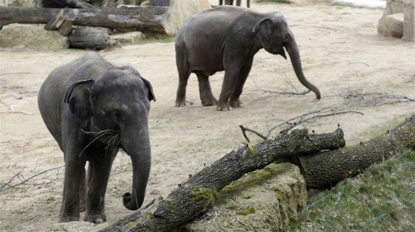 <p>Trasladan elefantes del Zoo de Mendoza</p><p></p>