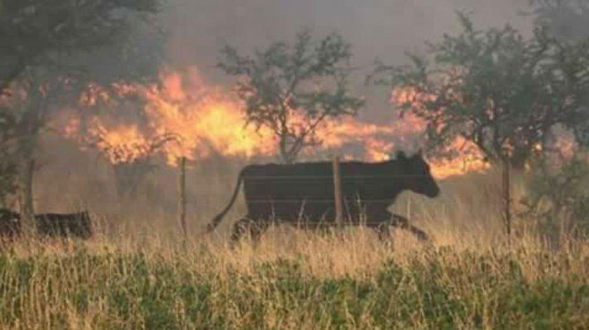 Así es el incendio en La Pampa<br>