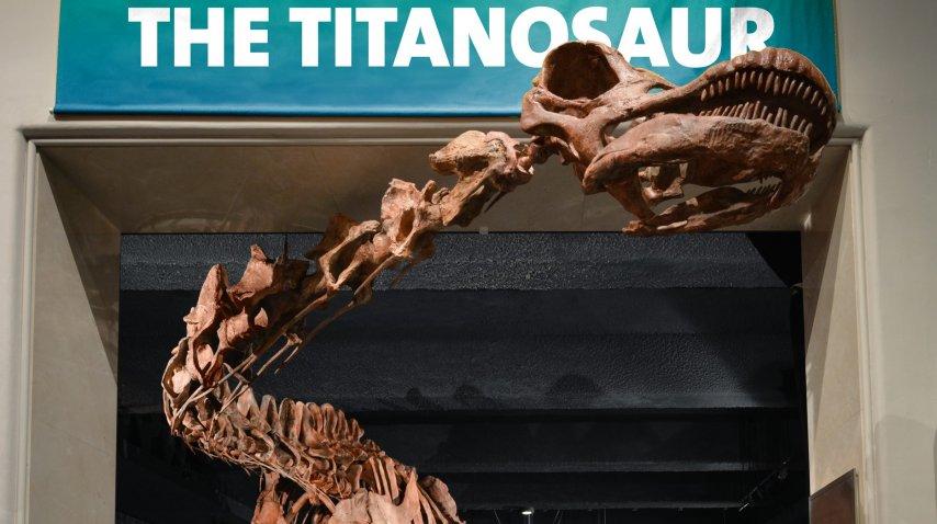 El Titanosauri, el dinosaurio más grande del mundo