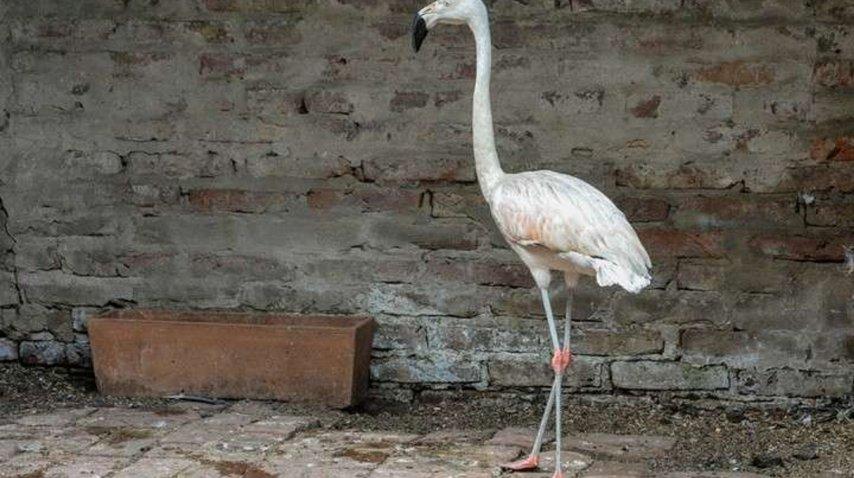 Rescatan más de 80 animales exóticos de una casa en Ituzaingó