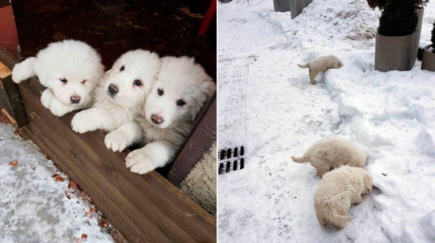 Los perritos sobrevivieron a la avalancha<br>