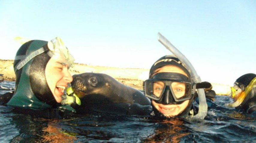 ¿Danza con lobos? Snorkeling con lobos<br>