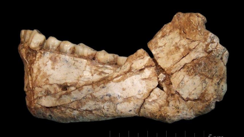 <p>Hallaron en Marruecos los restos de Homo Sapiens más antiguos</p><p></p>