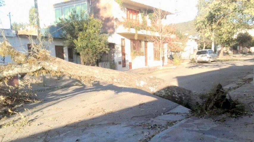 Caídas de árboles, postes y cortes de luz fueron los daños más vistos tras el temporal