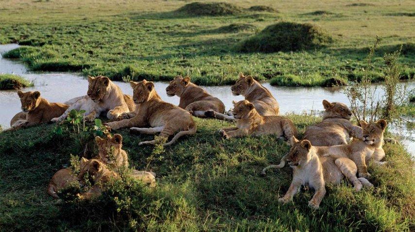 La reserva del Masai Mara, un gran atractivo turístico<br>