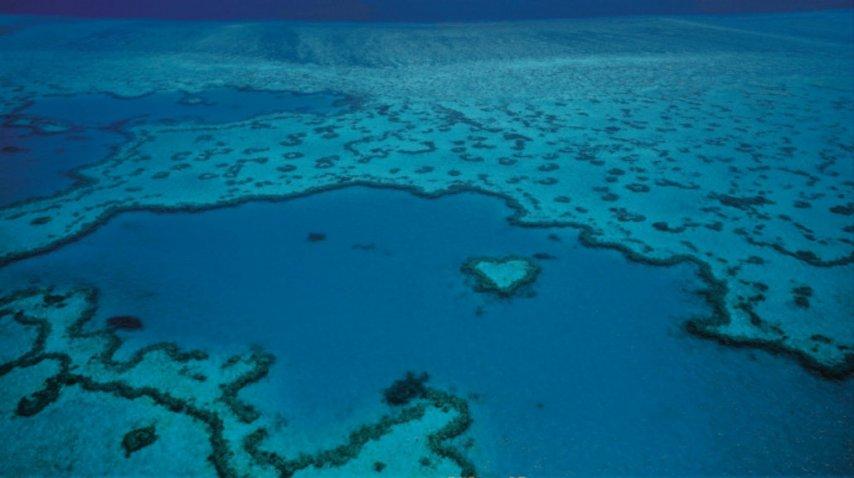 La Gran Barrera de Coral está en peligro por el cambio climático<br>