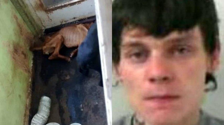 Cook fue sentenciado a cárcel en el Reino Unido por maltrato animal<br>
