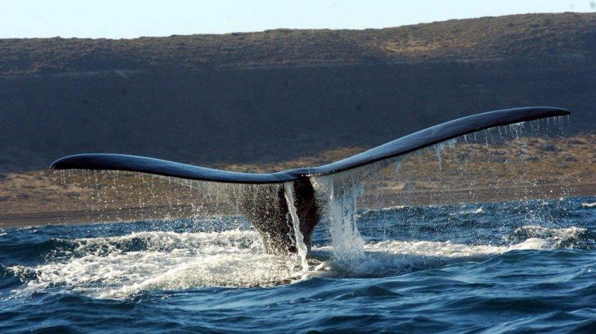 Ballenas en Puerto Madryn<br>